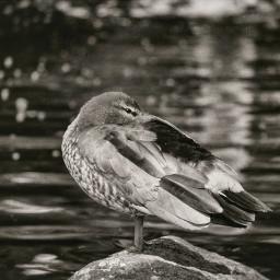 monochromephotography animals bnw_captures bnwphotography