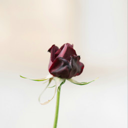 photography greece flower
