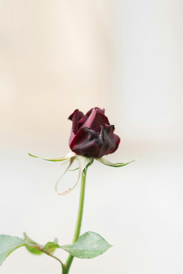 #photography #greece #flower