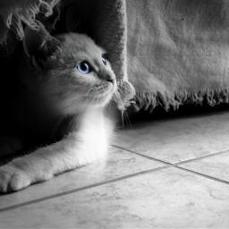 blackandwhite pretoebranco travel cat gato day
