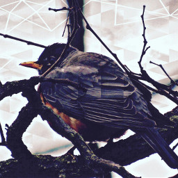 bird baretree coldweather backyard photography