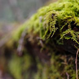 fernmoss log green nature naturephotography