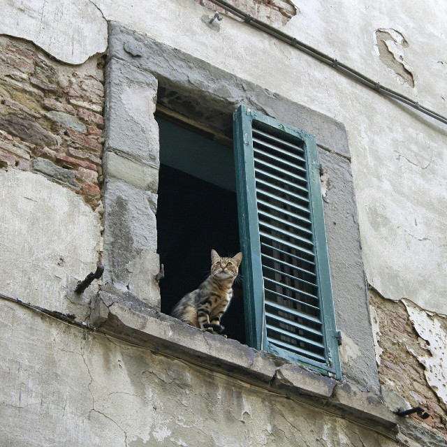The  #sentinel   #window  #windows  #wildlife  #pets & animals  #petsandanimals  #pets  #cat  #cats