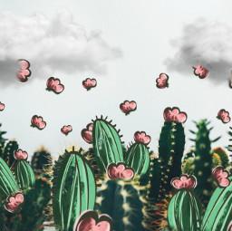 FreeToEdit cactiremix pa_remixme_faves cutouttool stickers picsartclipart clouds