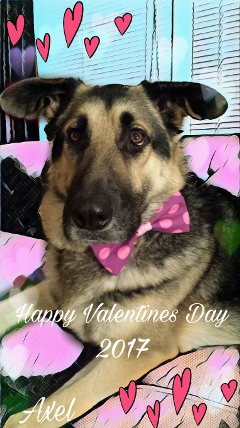 valentinesday dog love petsandanimals puppy