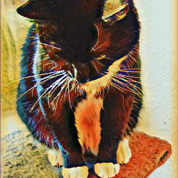 freetoedit cat cats art artist
