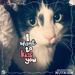 freetoedit nutrishforpets nutrishpets nutrish cats