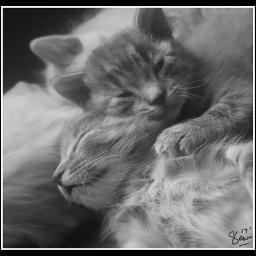 kitty kittylove hello kittysmash1 kittycat freetoedit