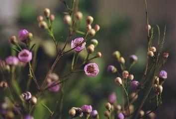 bokeh flower flowers flowerporn flowerphotography freetoedit