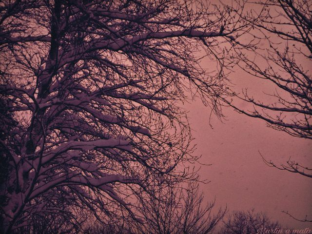 #pink,#scapes,#snowing,#winter,#tranquility