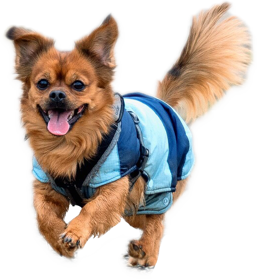 #FreeToEdit #ftestickers #dog #animal