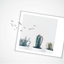 freetoedit cactus