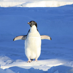 freetoedit penguin animal cute funny