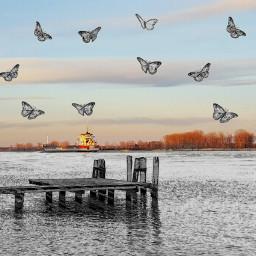 freetoedit myrmx pencileffect butterflies