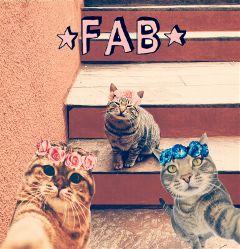 cats flowerband fabo cute selfie