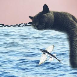 freetoedit daychallenge raimondspauls beach cat