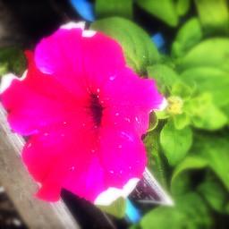 upcloseandpersonal flowerportrait portraitsofcolor petalsandblooms colorful