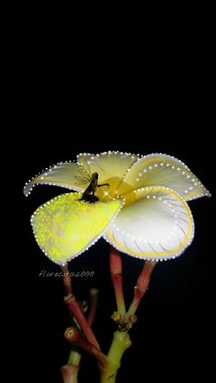 wappatternsonplants flower fantasy myphoto